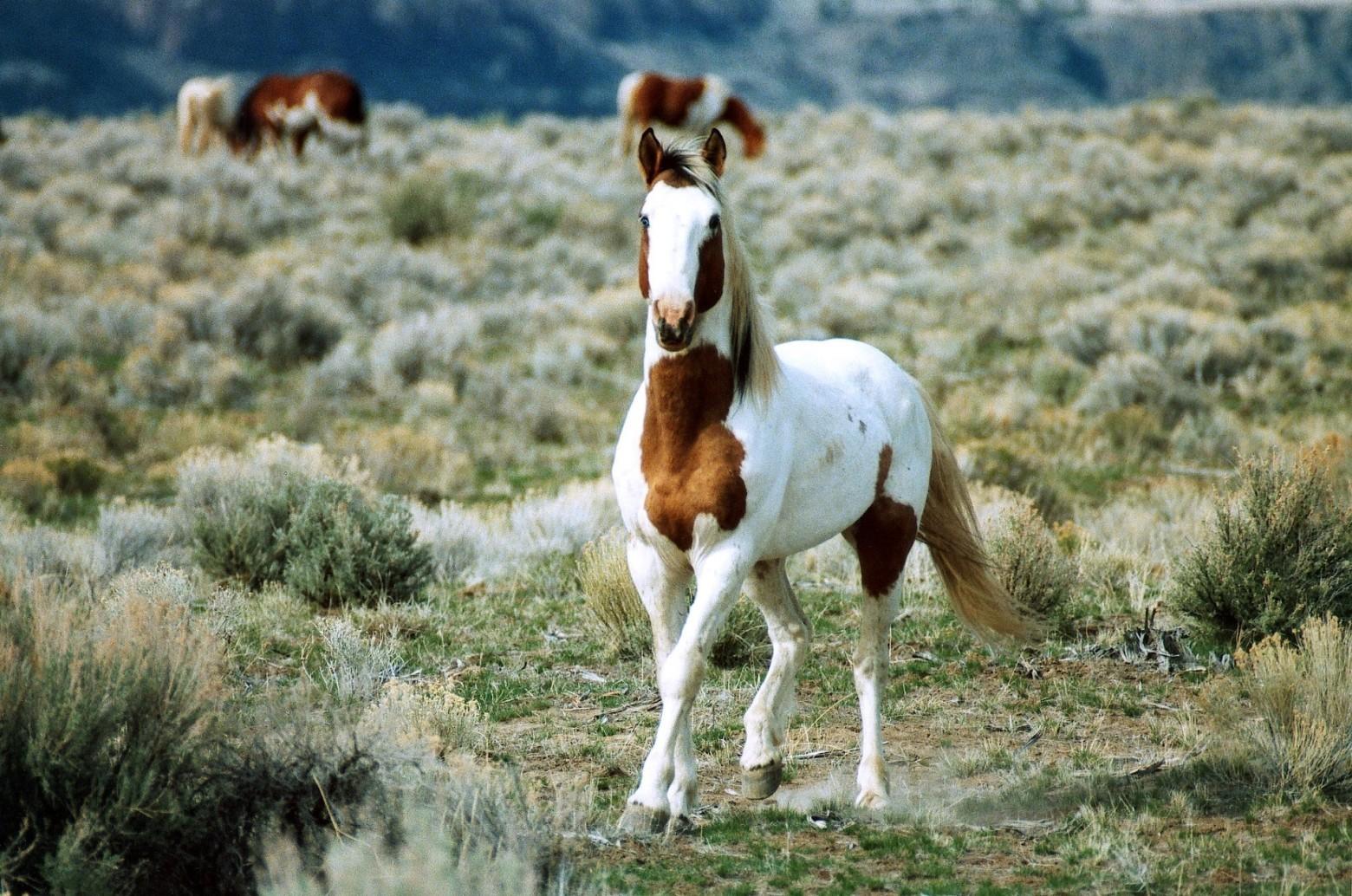 PEDI-HORSE